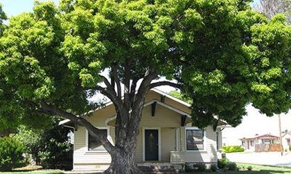 Trồng ngay 10 loại cây phong thủy trước nhà này, gia chủ sẽ may mắn, phát tài cả năm