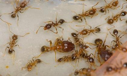 Cả đời không lo ruồi, muỗi, kiến, gián bén mảng đến nhà chỉ với một loại quả duy nhất này