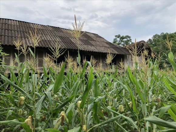 Ngôi nhà của cụ C. bên lưng đồi