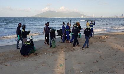 Đà Nẵng: Cá chết hàng loạt dạt bờ dài hơn 1km