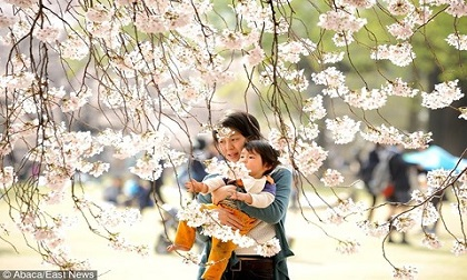 5 nguyên tắc vàng của người Nhật dạy con thông minh, kỷ luật từ nhỏ