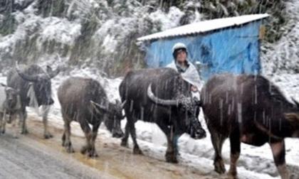 Miền Bắc rét đậm dịp Tết dương lịch, khả năng băng giá và mưa tuyết