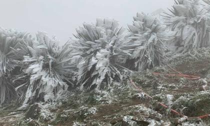 Khi nào đợt rét đậm, rét hại đang diễn ra ở miền Bắc kết thúc?