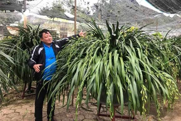 Huyền thoại giấc mộng vua Trần: 100 triệu/chậu địa lan chơi Tết