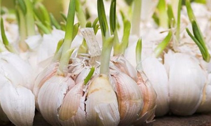 Sau Tết đừng tiếc rẻ những thực phẩm này vì rất độc hại, tuyệt đối đừng ăn