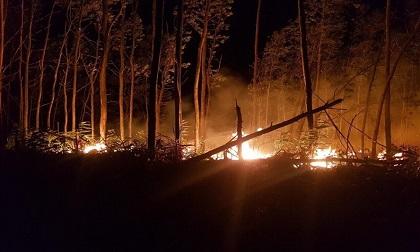Đốt rẫy làm cháy 5 hecta rừng tràm