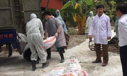 Dịch tả lợn châu Phi đã lan sang tỉnh thứ 10 tại Thái Nguyên