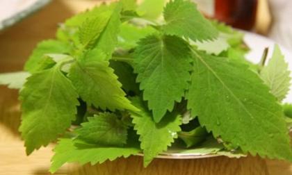 Những tác dụng chữa bệnh thần kỳ của loại rau thơm 'rẻ như bèo'
