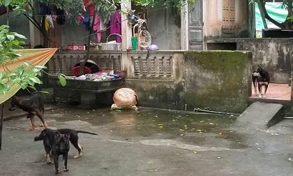Người dân kể phút kinh hoàng khi cháu bé ở Hưng Yên bị chó cắn chết