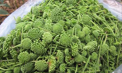 Bất ngờ loại rau đặc sản Việt đắt ngang cua hoàng đế, tôm hùm Mỹ