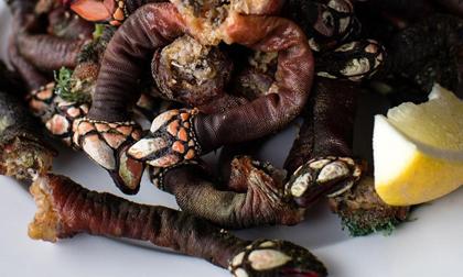 Loại ốc biển xấu xí 3 triệu/con, nhà giàu muốn mua không có
