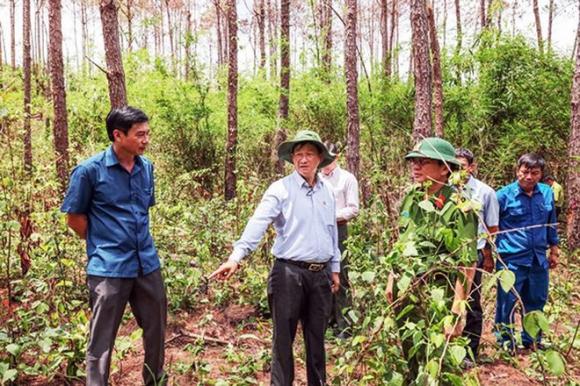 Khởi tố vụ án đầu độc hơn 3.400 cây thông gây chấn động - Ảnh 1.