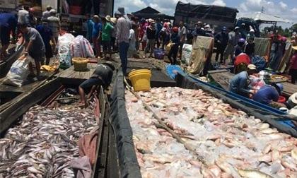 Gần 1.000 tấn cá chết trên sông La Ngà, thiệt hại hàng chục tỷ