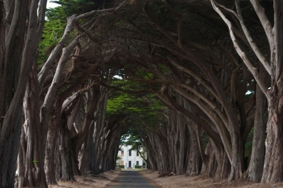 Rừng cây đan kín tạo thành đường hầm bí ẩn giữa lòng nước Mỹ - 1