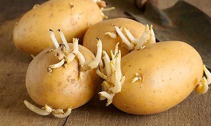 Thực phẩm có độc người Việt hay ăn, cần biết khi chế biến để khỏi chết người