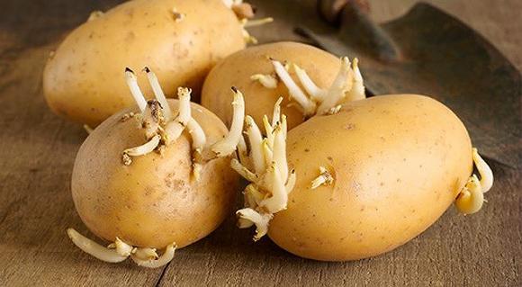 Thực phẩm có độc người Việt hay ăn, cần biết khi chế biến để khỏi chết người - 1