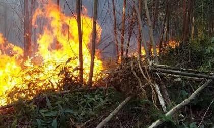 Rừng khắp nơi ở Thừa Thiên - Huế cháy ngùn ngụt