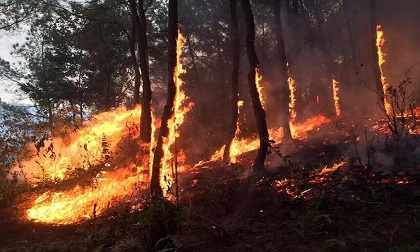 Người phụ nữ ngạt khói tử vong khi mang nước cho lực lượng chữa cháy rừng