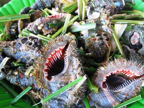 Ngộ độc ốc biển mùa du lịch: Ăn ốc thế nào để phòng tránh? - 2