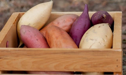 Không cần thuốc bổ, ăn khoai lang vừa tốt vừa chữa được nhiều bệnh nguy hiểm