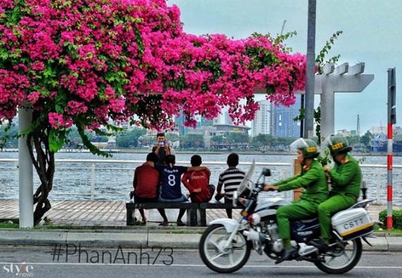Xao xuyến mùa hoa giấy nở thắm ven sông Hàn Đà Nẵng - 1