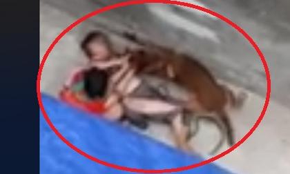 Hàng xóm kể lại giây phút kinh hoàng cụ bà bị chó dữ tấn công bê bết máu