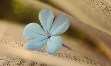 Hết thảy những gặp gỡ trên đời đều do nhân duyên, hãy biết trân quý những người đã xuất hiện trong cuộc đời bạn