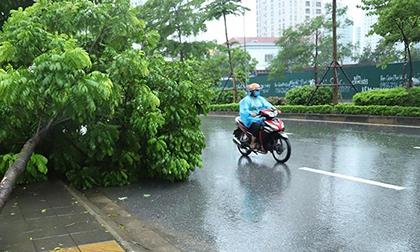 Dự báo thời tiết 6/8, Hà Nội mưa dông, đề phòng gió giật mạnh