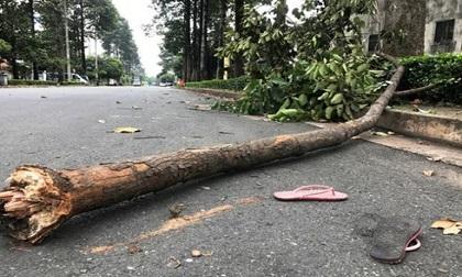 Đến trường ôn học sinh giỏi tỉnh, nữ sinh lớp 9 bị cành cây rơi trúng người tử vong