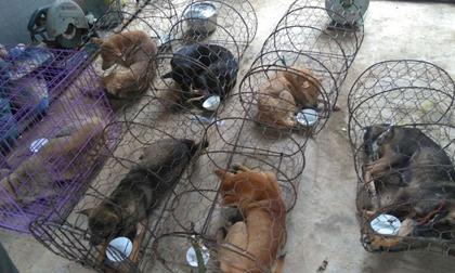 Vụ phá đường dây trộm chó 'khủng': Hỗ trợ chữa trị vết thương cho đàn chó