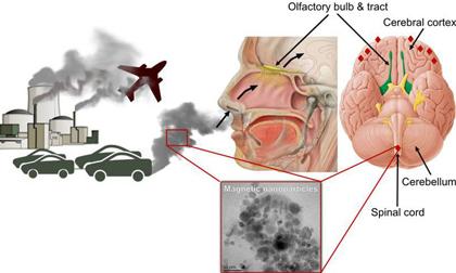Ô nhiễm không khí giết người theo cách nào?