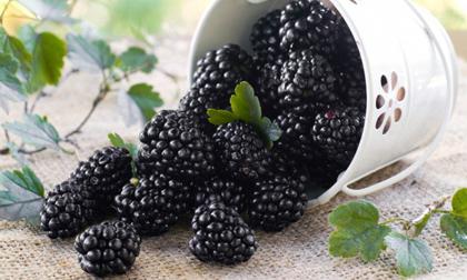12 loại quả bổ dưỡng cho người bị ung thư trong và sau quá trình điều trị bệnh