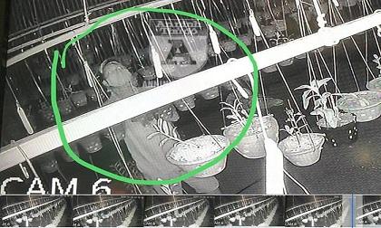 Cận mặt kẻ trộm lan táo tợn tại Hòa Bình lấy sạch toàn bộ lan đột biến trị giá 2,9 tỷ đồng