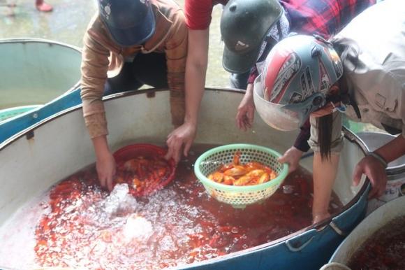 Tại chợ cá này, mặt hàng phổ biến nhất là cá chép đỏ loại nhỏ, với trọng lượng khoảng 4-5 con/1 lạng. Dù thương lái đổ cá về đây rất nhiều, nhưng sức mua từ các tiểu thương năm nay được đánh giá là chậm hơn so với những năm trước.