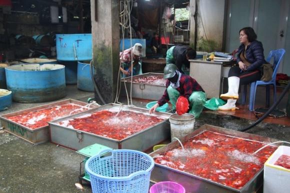Ngày 16/1 (tức 22 tháng Chạp âm lịch) tại chợ cá Yên Sở (Hoàng Mai, Hà Nội) rất nhiều xe ô tô từ các tỉnh thành như Phú Thọ, Bắc Ninh, Hà Nam đổ về đây để bán buôn cá chép đỏ, phục vụ người dân cúng ông Công ông Táo.