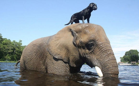 elephant-dog-friendship-bubbles-and-bella-2-15608547389711833528657