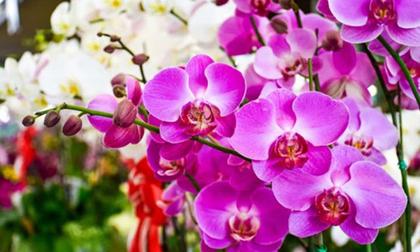 4 loài hoa đẹp nhưng tuyệt đối không được đặt lên bàn thờ ngày Tết