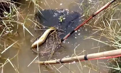 Điều tra vụ người đàn ông chết thảm khi đánh cá bằng kích điện ở rừng U Minh