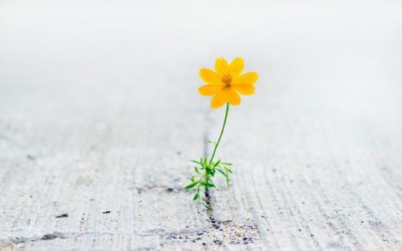 5 thói quen đơn giản giúp thay đổi hoàn toàn cuộc sống của bạn: Làm được 1 điều đời đã khác - Ảnh 5.