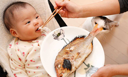 Những loại cá chứa nhiều dinh dưỡng cho trẻ ăn, giúp tăng cường khả năng miễn dịch