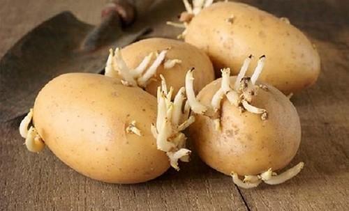 Sai lầm khi ăn khoai tây biến chúng thành thạch tín, nhất là điều thứ 2