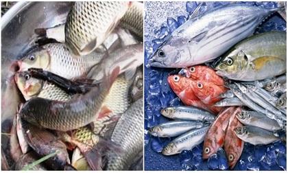Cá tốt cho sức khỏe nhưng 5 nhóm người chớ ăn kẻo rước bệnh