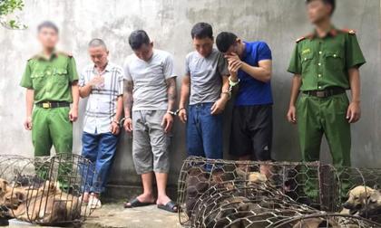 Nghệ An: Phá đường dây trộm chó liên tỉnh, trộm gần nửa tấn chó 1 đêm