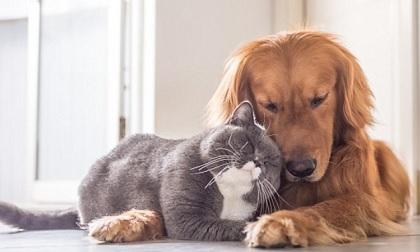 Thầy phong thủy chỉ ra đại kỵ khi nuôi chó mèo trong nhà, tránh phạm phải kẻo rước họa