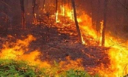 Hỏa hoạn thiêu rụi gần 10 ha rừng tại Vĩnh Phúc
