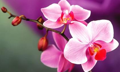 Các loại hoa kiêng kỵ đặt trên bàn thờ dịp Tết nguyên đán, gia chủ nên biết để tránh