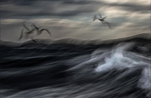 Những bức ảnh thiên nhiên ấn tượng năm 2020 - 1