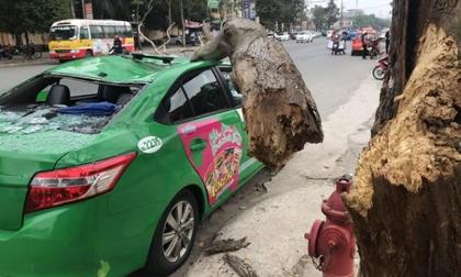 Tài xế và khách thoát chết khi vừa ra khỏi cửa thì cây đổ, đè bẹp xe taxi