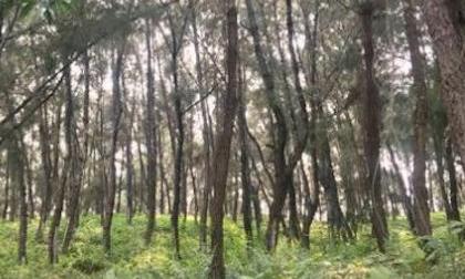 Nghệ An: Phát hiện thi thể trong rừng thông với nhiều vết đâm, nghi án mạng