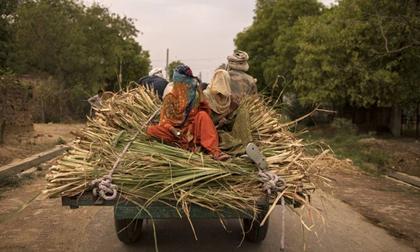 Ấn Độ: Nhiều gia đình bị 'xóa sổ' do COVID-19, dân nghèo sợ hãi tới mức không dám nói mình bị sốt